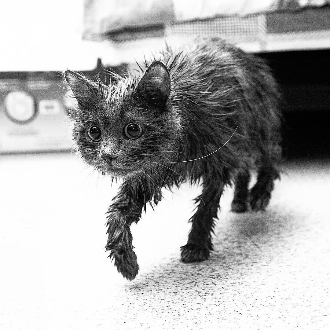 Кошка после купания